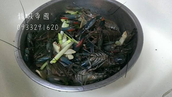 澳洲小龍蝦.jpg