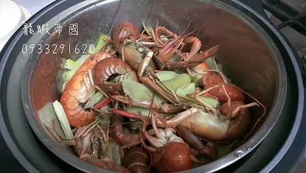 澳洲龍蝦抱卵.jpg