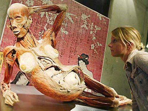 大連電視台女主持神秘失蹤疑為被製成人體標本