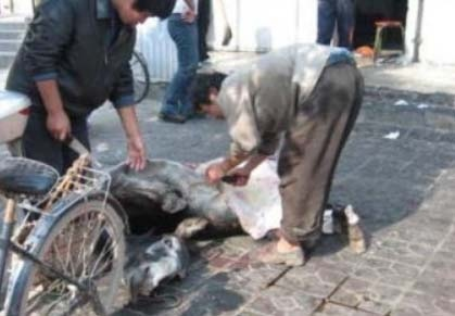 殘忍至極!中國十大禁菜令人毛骨悚然:澆驢肉