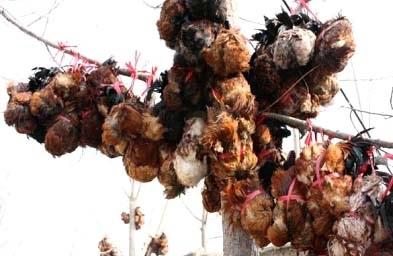殘忍至極!中國十大禁菜令人毛骨悚然:風乾雞