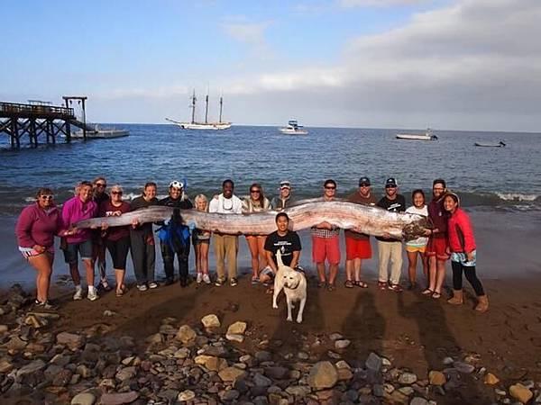 南加海岸現5米半長巨型皇帶魚