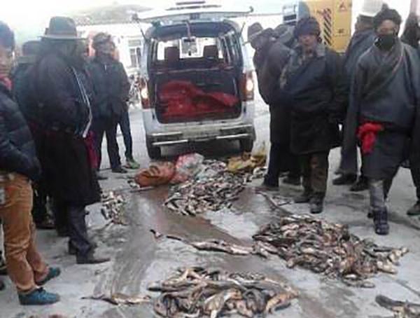 四川省甘孜州康定縣塔公鄉藏民展開示威請願。(受訪人提供)