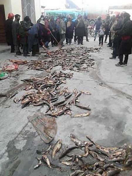 聚集在塔公鄉的藏民示威者。(受訪人提供)
