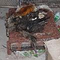 江蘇黑窩點貓肉當兔肉 查獲大量死貓,現場剛被剝下的貓皮。