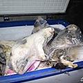 江蘇黑窩點貓肉當兔肉 查獲大量死貓,貓咪被活活凍死。