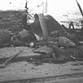 淞滬會戰巷戰中陣亡的國軍士兵。(網絡圖片)
