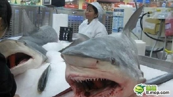 沃爾瑪賣鯊魚 賣鯊魚有甚麼好奇怪的呢?魚翅沒有被切下來單買,才是怪事吧?