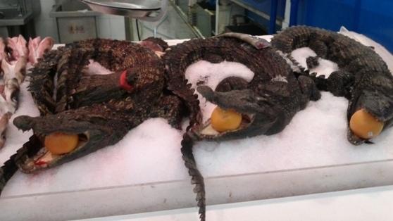 沃爾瑪裡有鱷魚出售 中國人的食物觀就是,凡是天上飛的,地上爬的,水裡游的,都能吃?