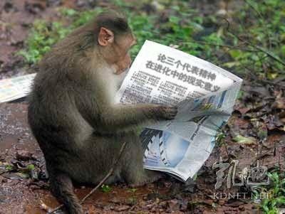 日前,大陸網絡凱迪論壇一個超過百萬點擊量的熱門帖文中,有網民跟貼上傳一張照片,照片中,一隻猴子在看報紙,報紙上新聞標題<論三個代表精神在進化中的現實意義>赫然可見。照片嘲諷江澤民「三個代表」意味明顯、引發圍觀。照片10月28日上傳,留存至今未被刪除。