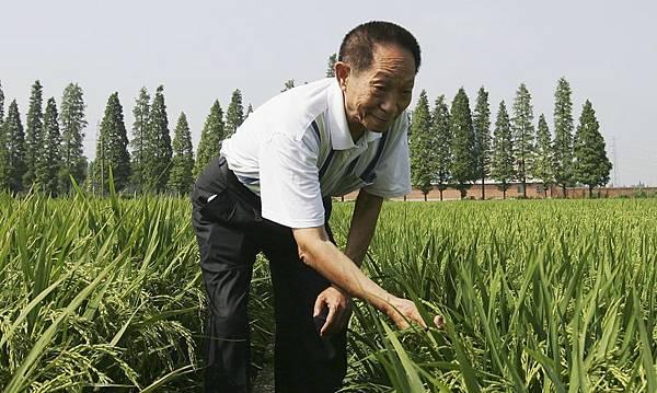 近日,大陸網絡行盛傳一則「中國最大劫難已無法避免」的網文,裡面羅列了據說是中國「雜交水稻之父」、中國工程院院士袁隆平真言吐露的關於中國糧食危機無法避免、隨時爆發的十個理由。同時,最近召開七常委一同亮相的中共中央工作會議中,當局將中國糧食安全問題擺在明年六大經濟任務之首等跡象都表明,糧食安全這個「中國最大劫難」已經震驚中南海。