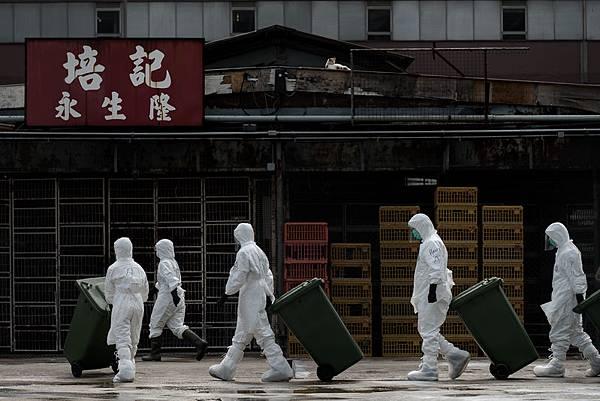 香港對一批來自廣東佛山順德的供港活雞檢測時,結果顯示對H7禽流感病毒呈陽性反應。香港長沙灣臨時家禽批  發市場內大約二萬隻活雞將被銷毀,市場將關閉21日進行清洗,同時停止活雞交易。香港同時暫停內地活雞供港和  禁止本地雞農活雞出場。(PHILIPPE LOPEZ/AFP/Getty Images)