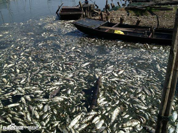南水北調工程,大量污水排入山東東平湖,曾是村民們賴以生存的東平湖裡,密密麻麻飄滿死魚。東平縣銀山鎮  顧龐村105戶養殖戶幾乎都破產。(網絡圖片)