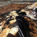 世界衛生組織日前發佈《世界癌症報告》稱,癌症已經成為全世界人類的最大致死原因,而中國大陸的癌症發病  率已經處於世界首位。中國癌症村絕大多數是被化工廠、垃圾處理廠、礦山等汙染了當地的水源、耕地和空氣而  造成的。(AFP)