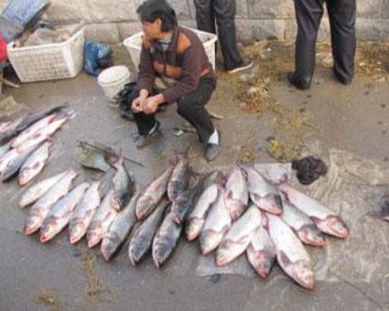 別買菜市上的活魚!吃魚的話,最好買冰鮮的。(網絡截圖)