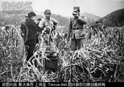 中國共產黨在延安大量種植並販賣鴉片(當時暗稱「特貨」,種植區稱為 「特區」)