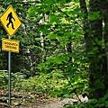 最近有人在加拿大溫哥華島親眼看到一隻傳說中的大腳野人(Sasquatch)。(網絡圖片)