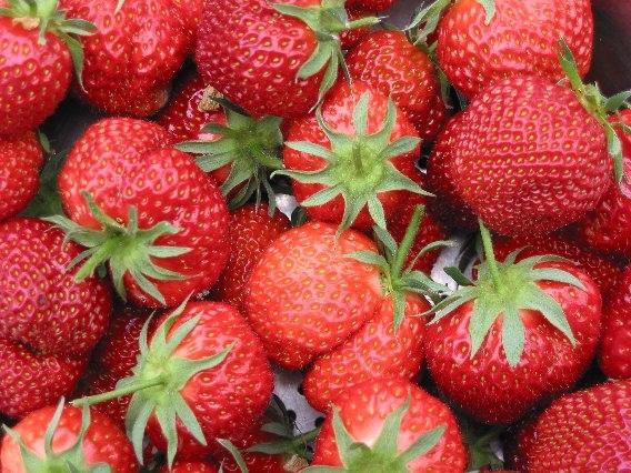 德國市場上八成草莓來自中國,但不是新鮮草莓,而是深凍草莓。(Maksim/維基百科)