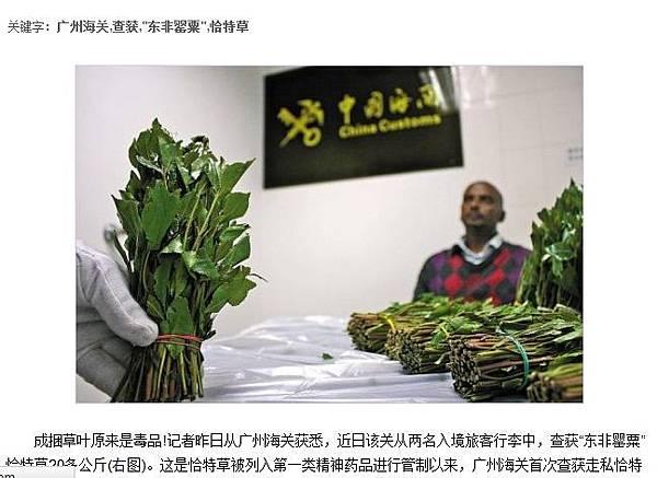 今年初,廣州海關從兩名入境旅客行李中,查獲「東非罌粟」恰特草20多公斤 。(網頁截圖)