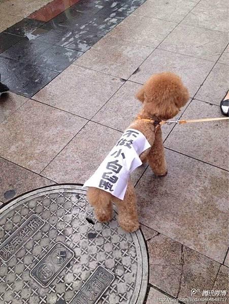 5月25日,廣東深圳居民帶著寵物狗,上寫有「不做小白鼠」字樣,遊行抗議。(網絡圖片)