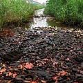 《中國經濟週刊》今年4月報導,中共官方報告公佈了一向被視為「國家機密」的中國土壤污染數據。報告稱,中國有近五分之一的  耕地受到污染。圖為,2014年2月11至13日,江西九江市金鼎鎢鉬礦業公司長期濫排廢水造成嚴重污染。(網絡圖片)
