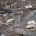 中國大陸水污染形勢十分嚴峻。中共環保部今年3月公開的信息顯示,中國有2.5億人居住在「高風險地區」,2.8億居民飲用水不  安全。。圖為汾河山西省太原市上蘭村段,水面漂滿垃圾。(大紀元資料室)