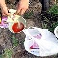 「西瓜大王」演示如何配製生西瓜催熟汁。(網絡圖片)