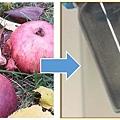 德國卡爾斯魯厄理工學院的科學家利用廢棄的爛蘋果製造鈉離子電池,既便宜又有高效能。(Karlsruhe Institute of Technology)