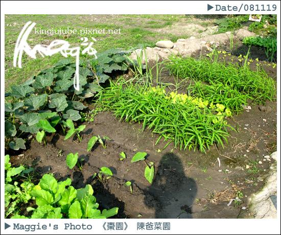 陳爸菜園總覽.jpg
