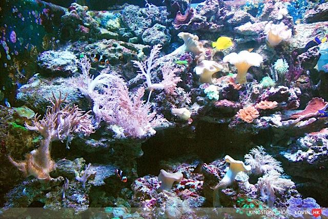 海洋公園_031