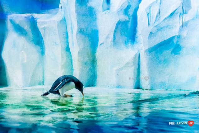 海洋公園2019_7冰極餐廳_4.jpg