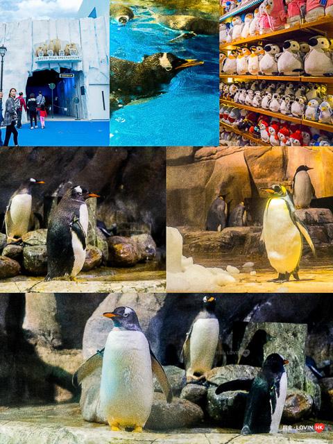 海洋公園2019_8南北極館_2.jpg