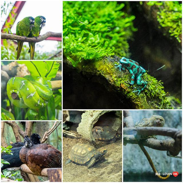 海洋公園2019_10熱帶雨林_1.jpg