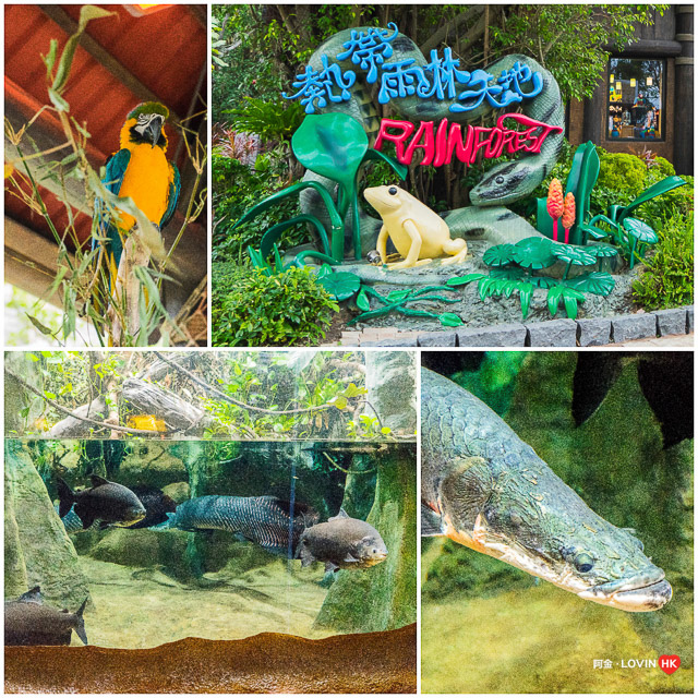 海洋公園2019_10熱帶雨林_2.jpg
