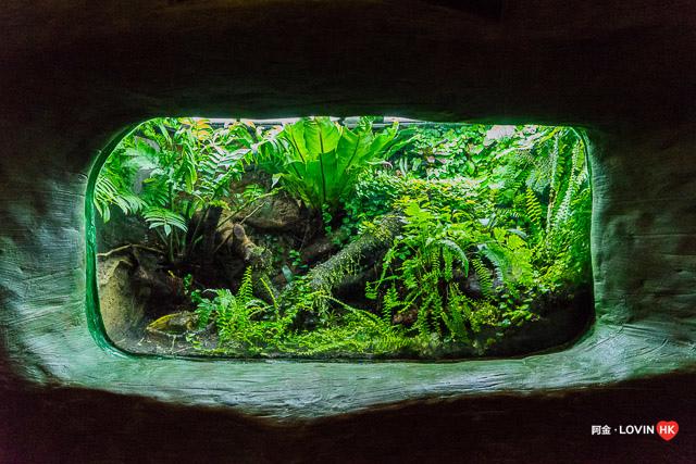 海洋公園2019_10熱帶雨林_15.jpg