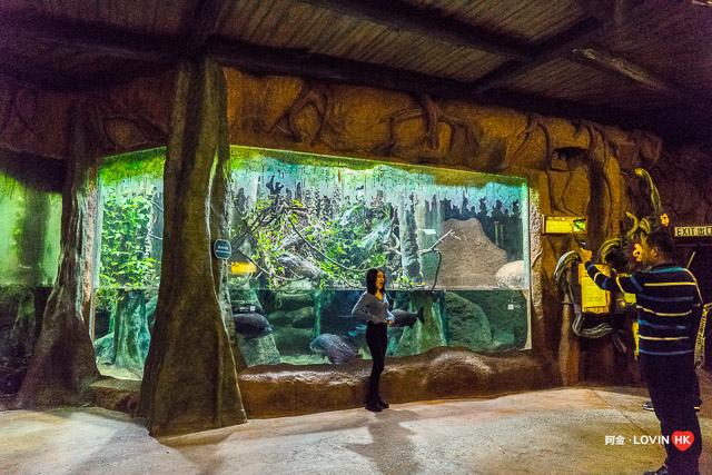 海洋公園2019_10熱帶雨林_16.jpg