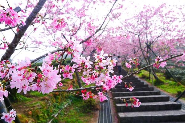 杉林溪花季3