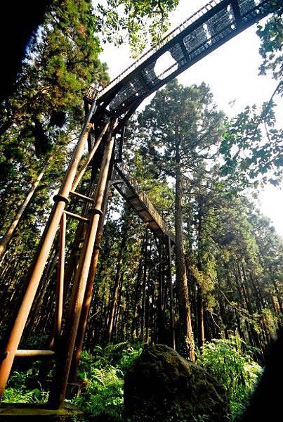 溪頭森林遊樂區4