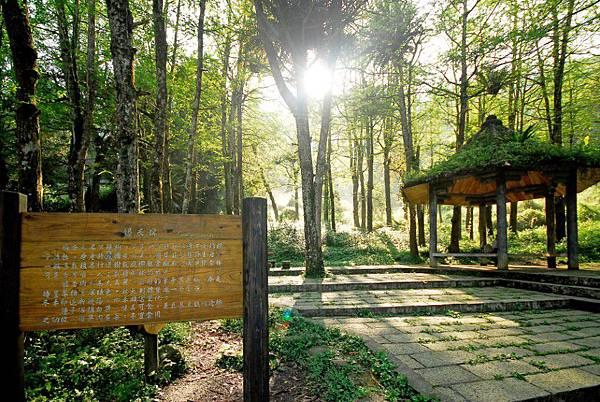 溪頭森林遊樂區5