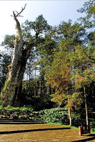 溪頭森林遊樂區3