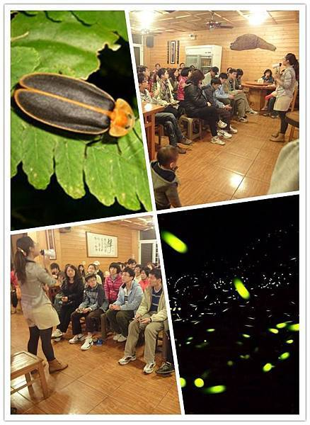 鹿谷螢火蟲季