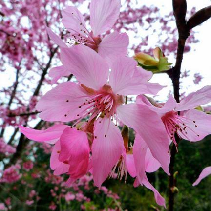 2016杉林溪花季