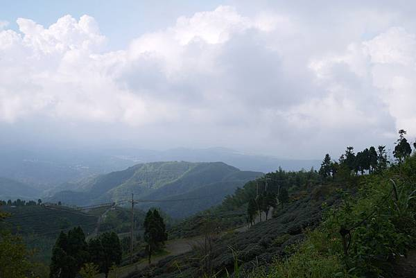 銀杏森林9.jpg