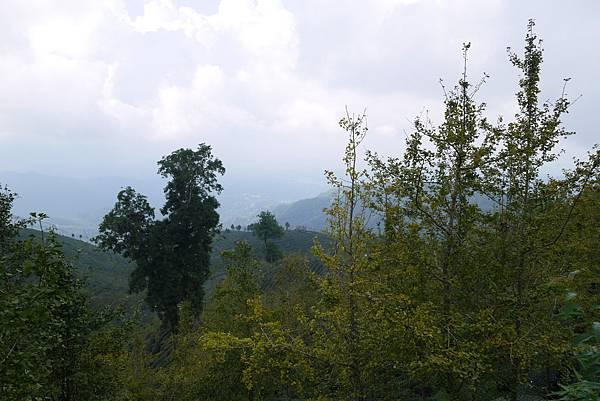 銀杏森林10.jpg