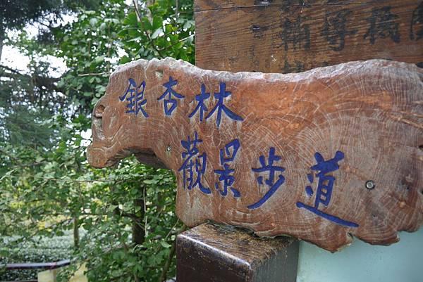 銀杏森林16.jpg