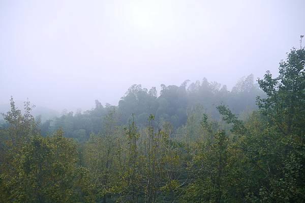 銀杏森林21.jpg