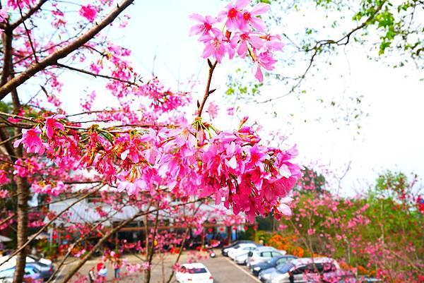 南投賞花景點1.jpg