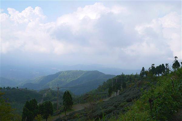 溪頭旅遊景點3.jpg