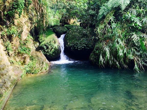 溪頭旅遊景點4.jpg