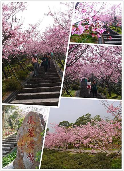 2018櫻花季